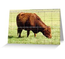 Big Red -- Grazing Cattle Greeting Card