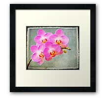 Pink orchid with texture Framed Print