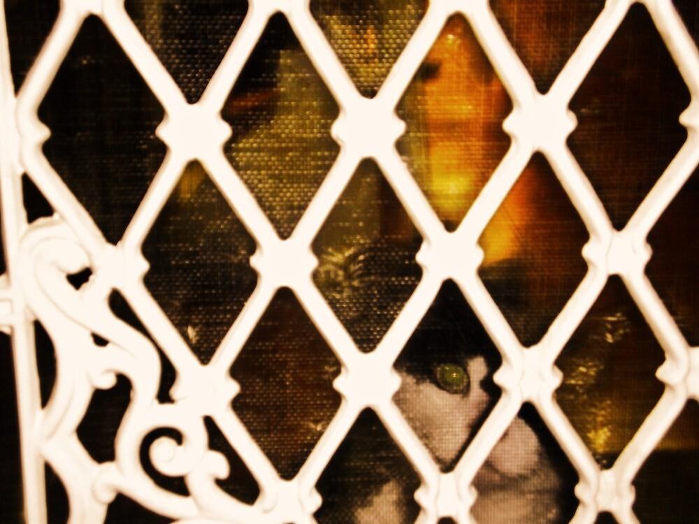 peeping tom. by alyssa naccarella