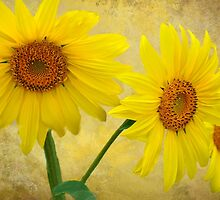 Sunflower Trio by Diane Schuster