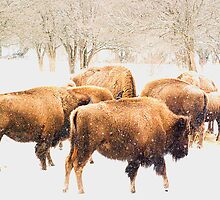 Snowy Herd by sundawg7