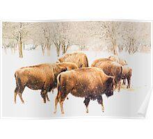 Snowy Herd Poster