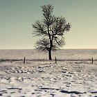Lake Manitoba, Canada by Michael Stocks