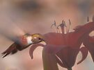 First Light And The Nectar's Just Right! by Diane Schuster