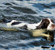 Swimming Springer by JEZ22