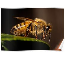 Perched Bee Poster