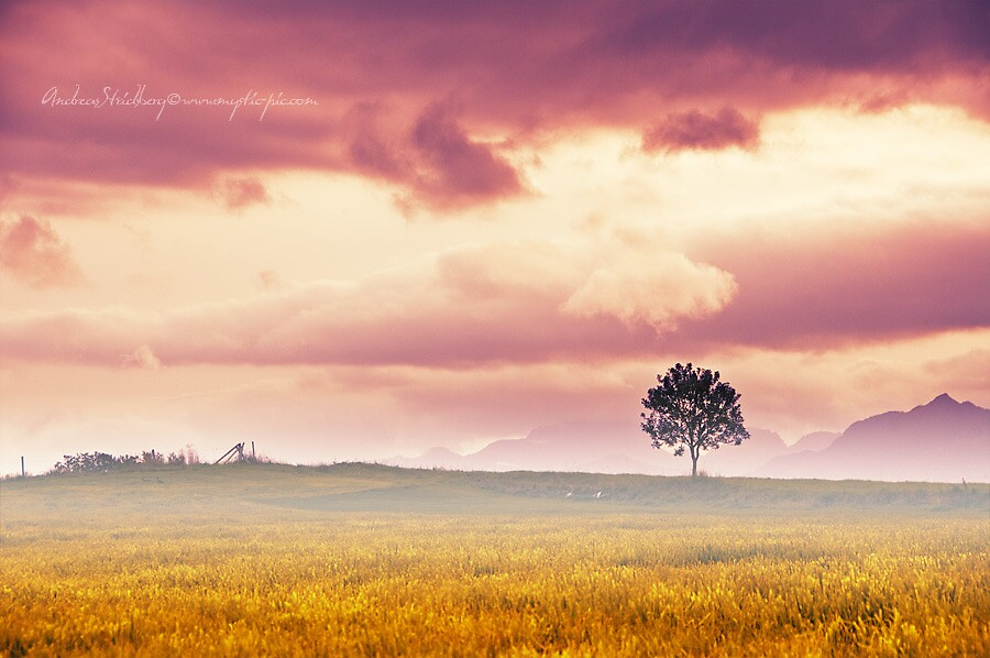 Pink Sky by Andreas Stridsberg