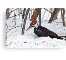 Snow Pecker Canvas Print