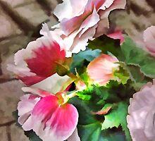 Begonia Mist by Eileen McVey