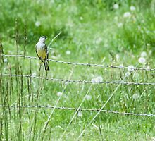 Bird on a wire by Creative Images