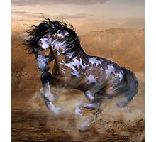 The Wild,The Free Painted Horse Photographic Print