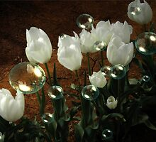White Tulip Bubbles by judygal