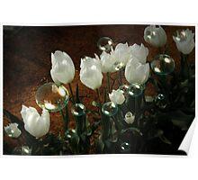 White Tulip Bubbles Poster