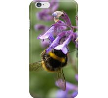 bumble bee sipping nectar iPhone Case/Skin