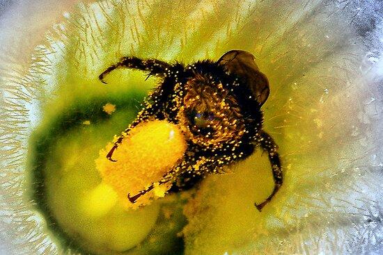OOOOH! Honey Honey!! by naturelover