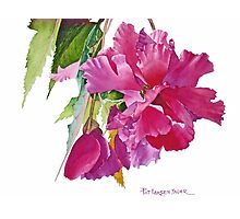 Ruffled Begonia Watercolor Photographic Print