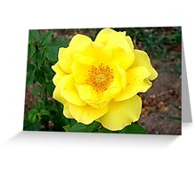 The soft yellow roses Greeting Card