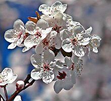 Sweet Spring by Kathy Yates