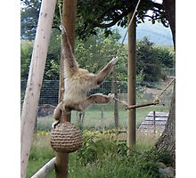 monkey-ing around Photographic Print
