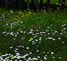 ...and daisies by lumiwa