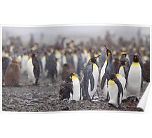 King Penguin Gathering Poster