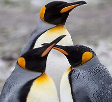 Trio of Penguins by tara-leigh