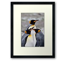 Trio of Penguins Framed Print