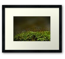 Fragile and Strong Nature Framed Print