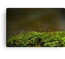 Fragile and Strong Nature Canvas Print