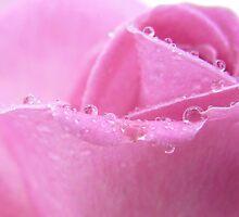 pink V by Floralynne