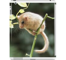 Dormouse iPad Case/Skin