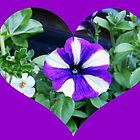 Purple Petunia Heart by kathrynsgallery