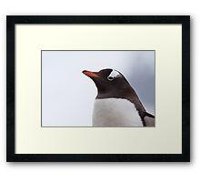 Gentoo Penguin Portrait Framed Print