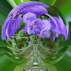 VANDA ORCHIDS IN A BUBBLE by Johan  Nijenhuis