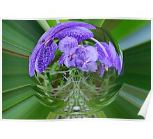 VANDA ORCHIDS IN A BUBBLE Poster