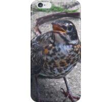 Baby Robin iPhone Case/Skin