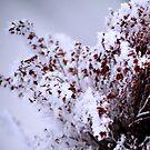 Winter bouquet by Bluesrose