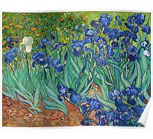 Vincent Van Gogh irisis Poster