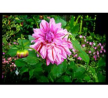 Naik Michel Photography - Hortensia House Garden Pink Flower 001 Photographic Print