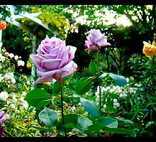 Naik Michel Photography - Hortensia House Garden Purple Flower Roses 001 by Naik Michel