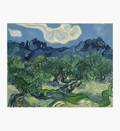 Vincent Van Gogh the olive trees Photographic Print