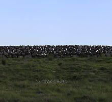stone wall by erwina