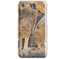 Kissing Kangaroos iPhone Case/Skin