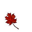 Leaf by Lydia Kurnia
