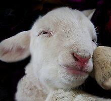 Lamb Dreams by Seesee