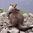 Oriental Small clawed Otter laying back relaxing by steve37