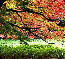 Westonbirt Tree by Joe Shillaker