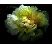 golden ribbons Photographic Print
