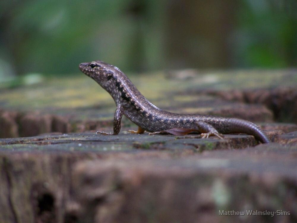 Lizard on a Stump by Matthew Walmsley-Sims