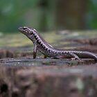 Lizard on a Stump by Matthew Walmsley-Sims